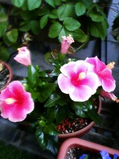 花みっつです!
